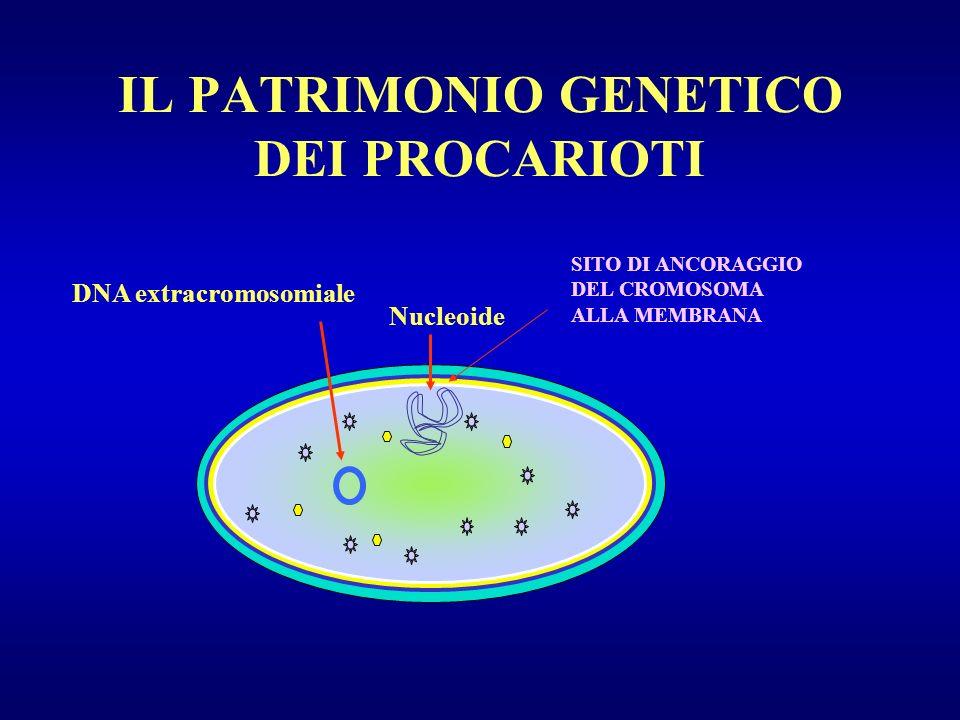 IL PATRIMONIO GENETICO DEI PROCARIOTI