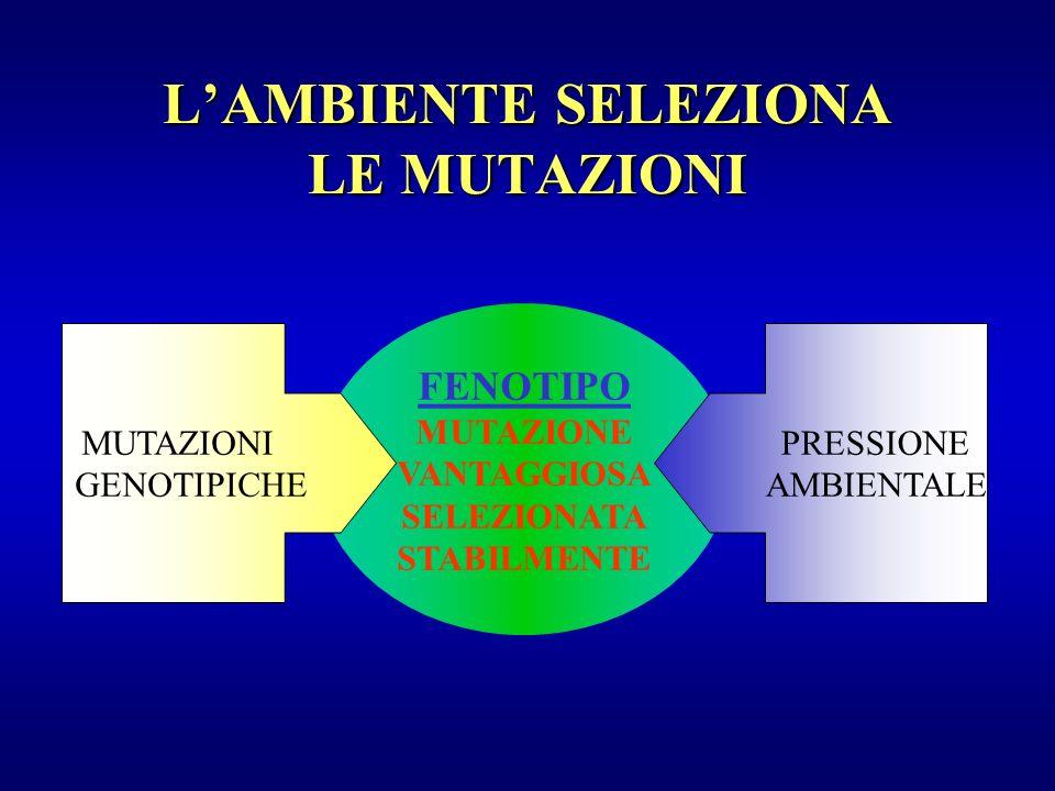L'AMBIENTE SELEZIONA LE MUTAZIONI