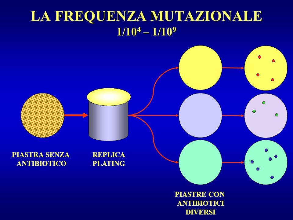 LA FREQUENZA MUTAZIONALE 1/104 – 1/109