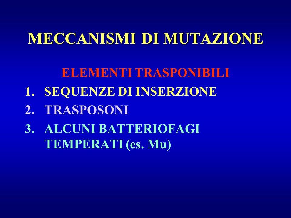 MECCANISMI DI MUTAZIONE