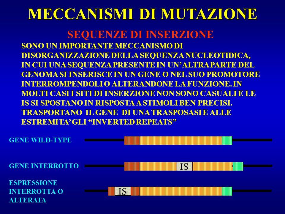 MECCANISMI DI MUTAZIONE SEQUENZE DI INSERZIONE