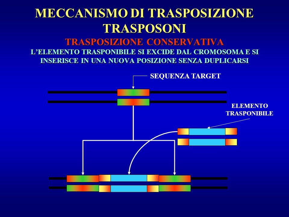 MECCANISMO DI TRASPOSIZIONE TRASPOSONI TRASPOSIZIONE CONSERVATIVA L'ELEMENTO TRASPONIBILE SI EXCIDE DAL CROMOSOMA E SI INSERISCE IN UNA NUOVA POSIZIONE SENZA DUPLICARSI