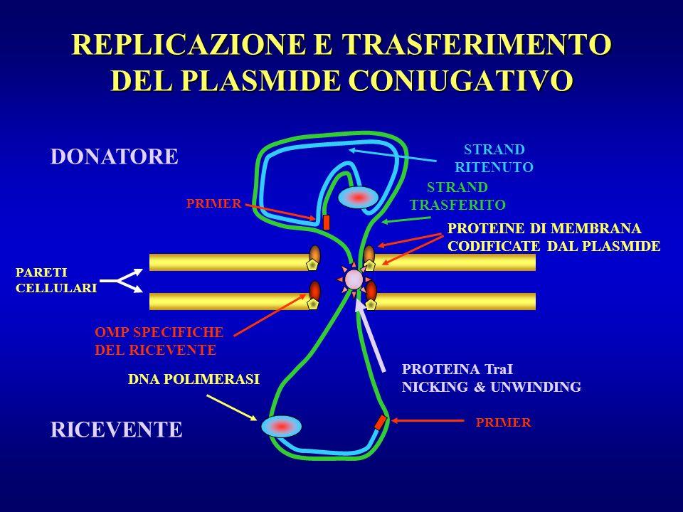 REPLICAZIONE E TRASFERIMENTO DEL PLASMIDE CONIUGATIVO