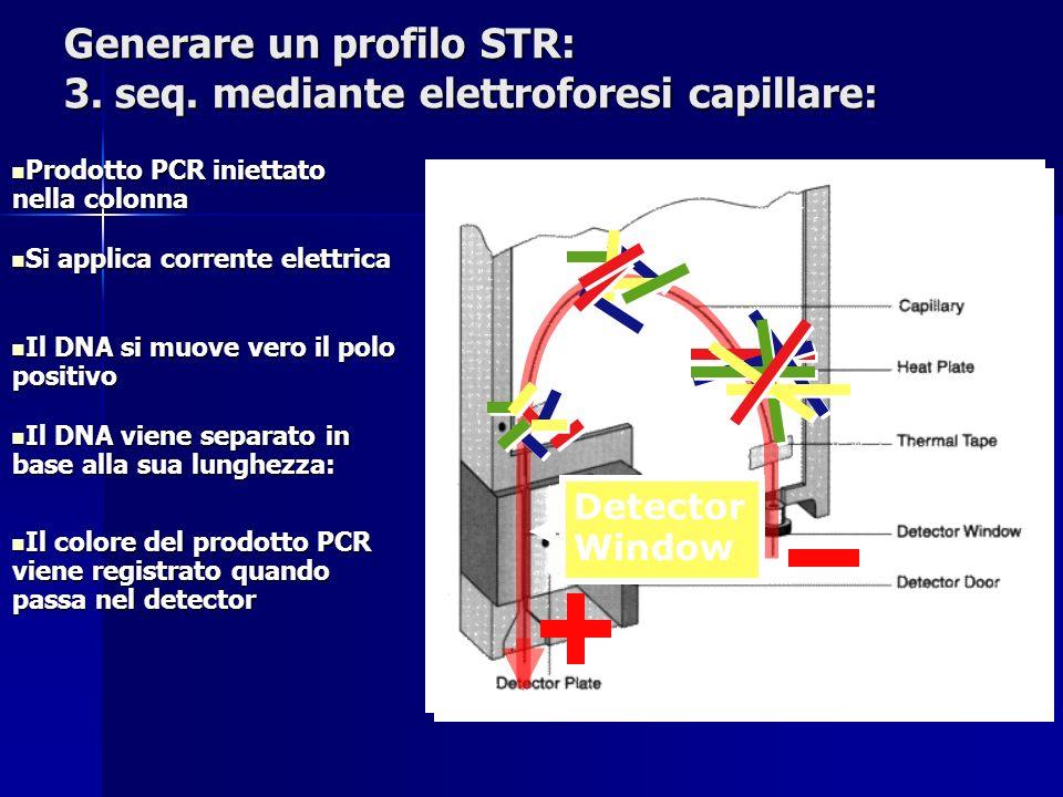 Generare un profilo STR: 3. seq. mediante elettroforesi capillare:
