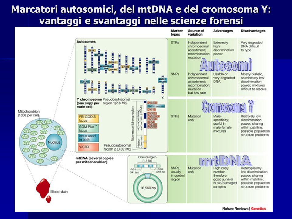Autosomi Cromosoma Y mtDNA