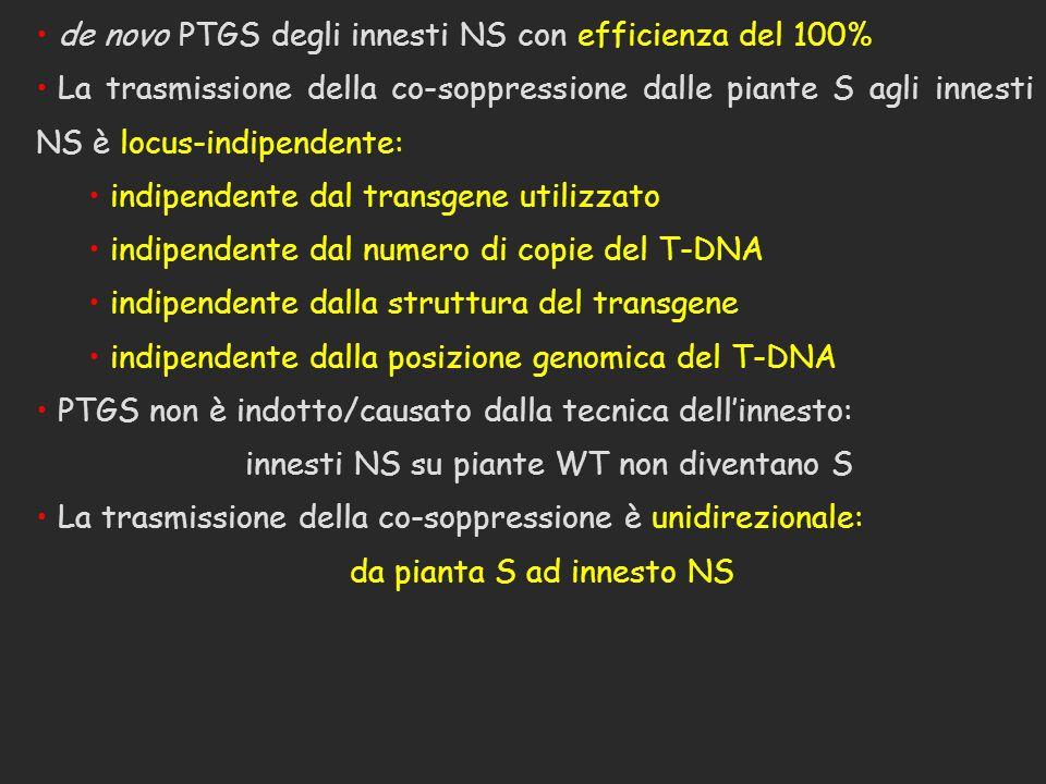 de novo PTGS degli innesti NS con efficienza del 100%