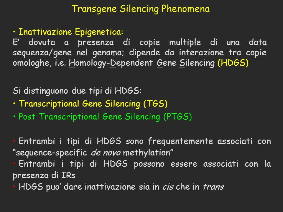 Transgene Silencing Phenomena