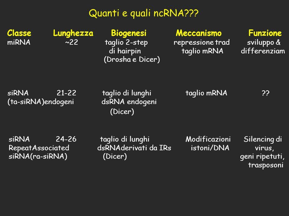 Quanti e quali ncRNA (Dicer)