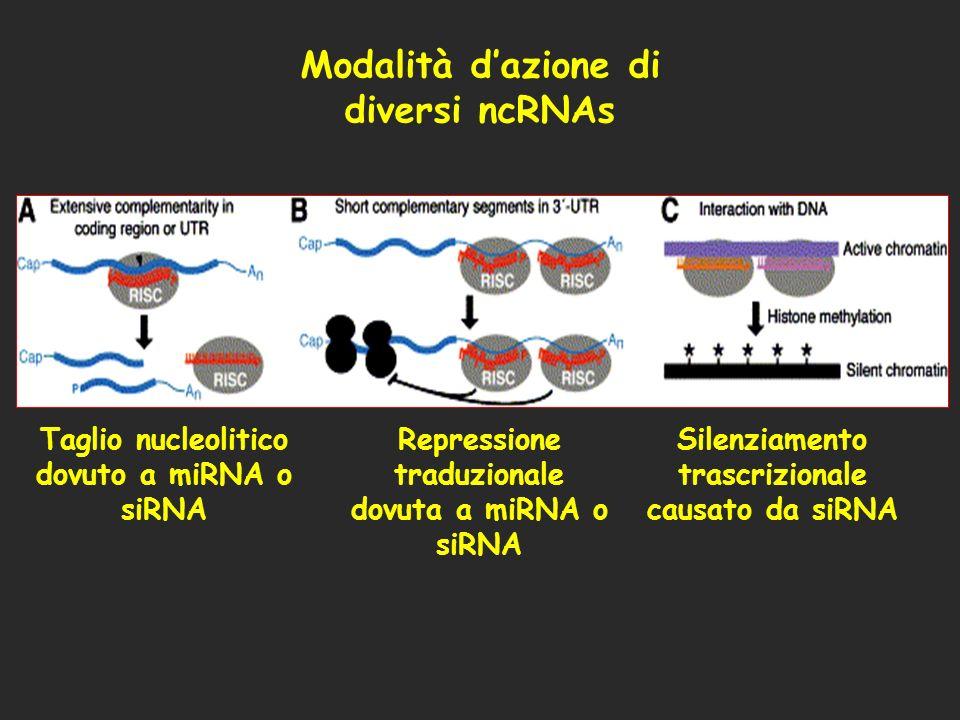 Modalità d'azione di diversi ncRNAs