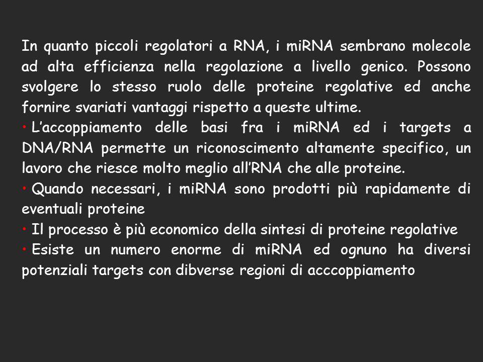 In quanto piccoli regolatori a RNA, i miRNA sembrano molecole ad alta efficienza nella regolazione a livello genico. Possono svolgere lo stesso ruolo delle proteine regolative ed anche fornire svariati vantaggi rispetto a queste ultime.