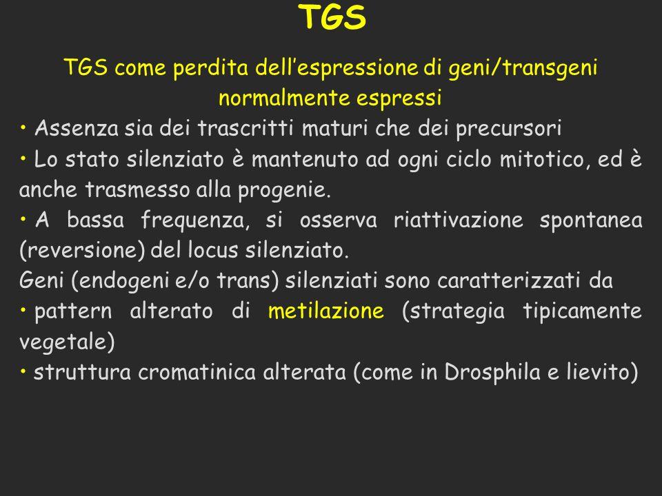 TGS TGS come perdita dell'espressione di geni/transgeni normalmente espressi. Assenza sia dei trascritti maturi che dei precursori.