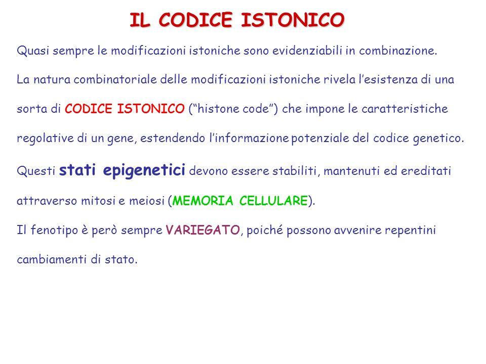 IL CODICE ISTONICOQuasi sempre le modificazioni istoniche sono evidenziabili in combinazione.