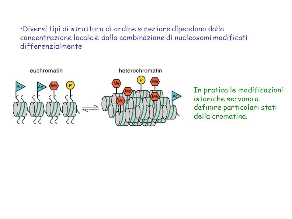 Diversi tipi di struttura di ordine superiore dipendono dalla concentrazione locale e dalla combinazione di nucleosomi modificati differenzialmente