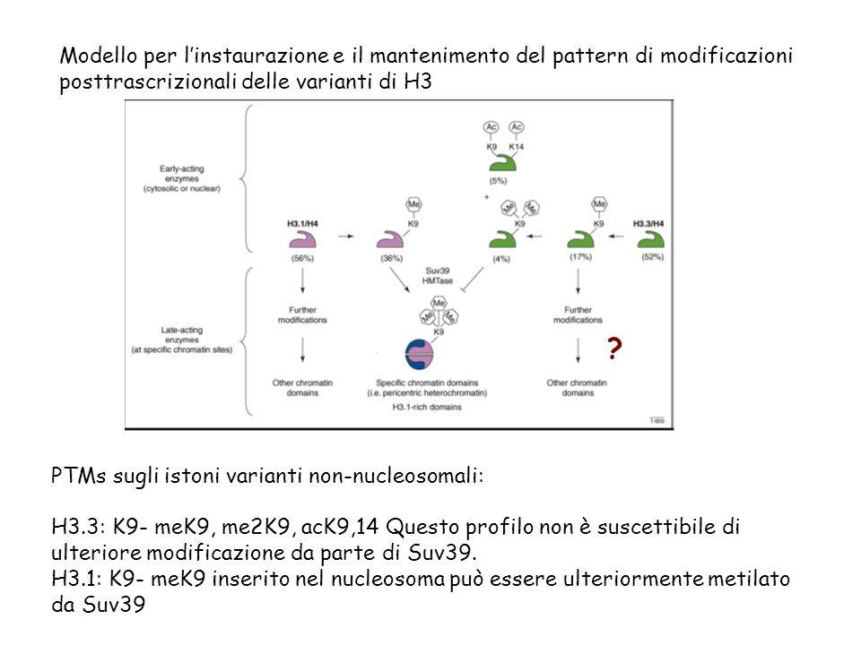 Modello per l'instaurazione e il mantenimento del pattern di modificazioni