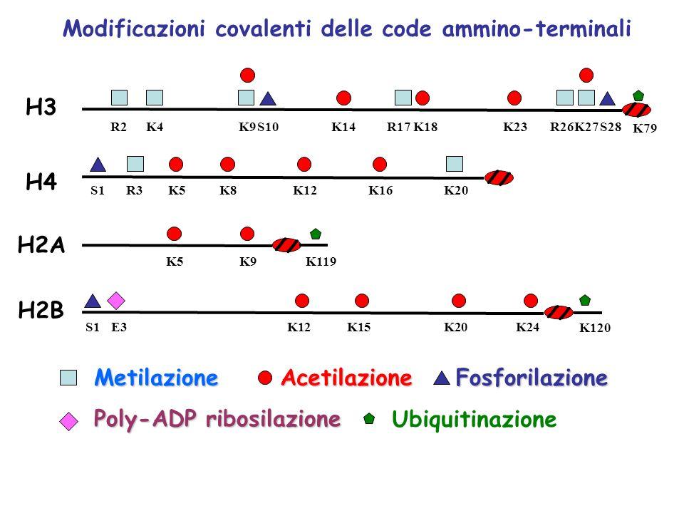 Modificazioni covalenti delle code ammino-terminali