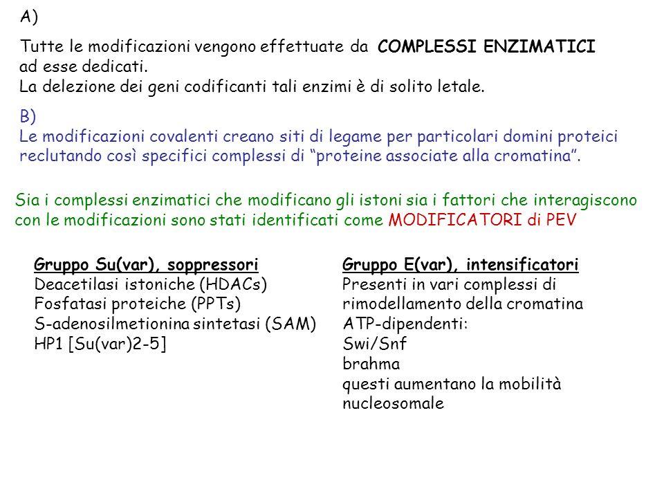 A) Tutte le modificazioni vengono effettuate da COMPLESSI ENZIMATICI ad esse dedicati.