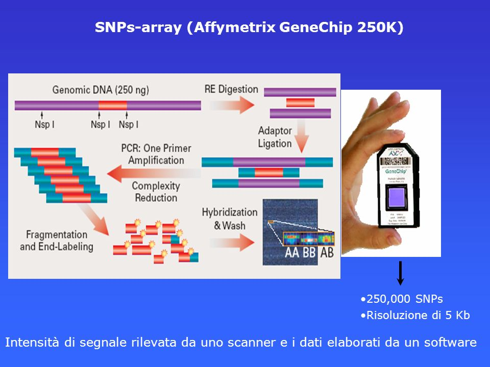 SNPs-array (Affymetrix GeneChip 250K)
