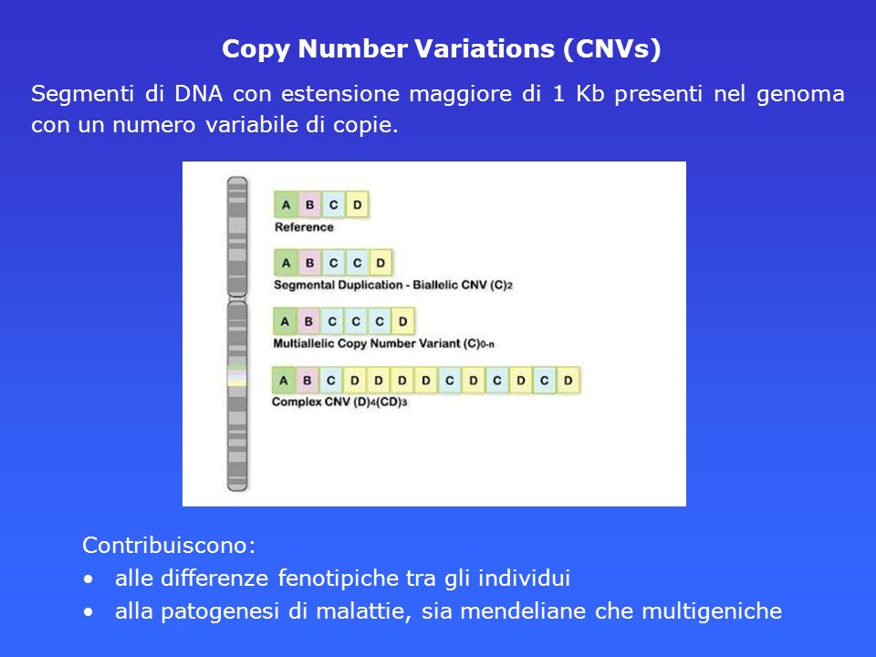 Copy Number Variations (CNVs)