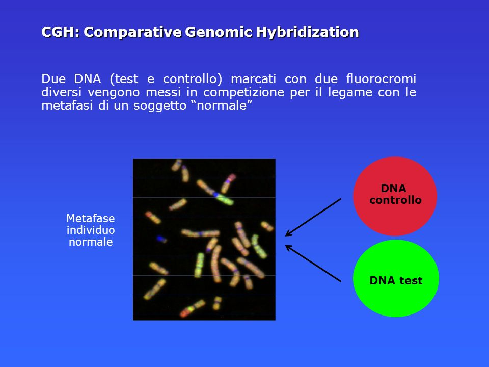 CGH: Comparative Genomic Hybridization