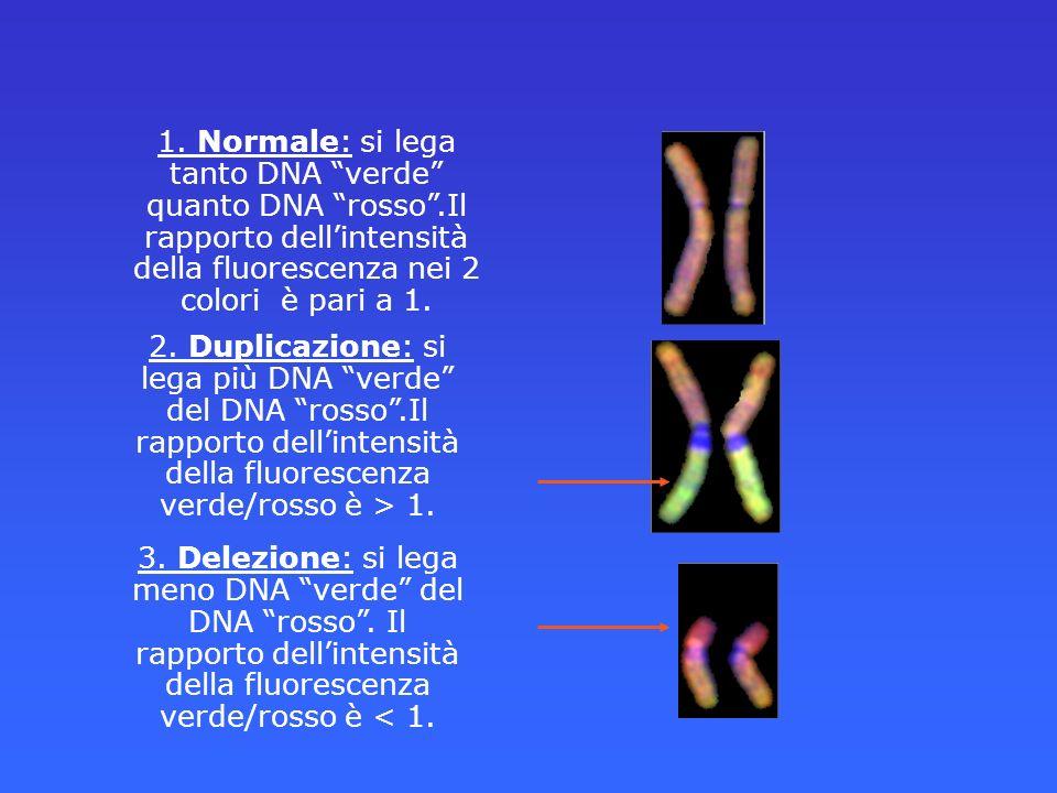 1. Normale: si lega tanto DNA verde quanto DNA rosso