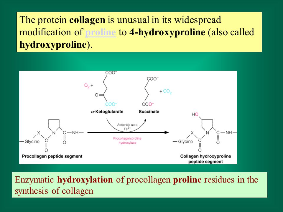 The protein collagen is unusual in its widespread modification of proline to 4-hydroxyproline (also called hydroxyproline).