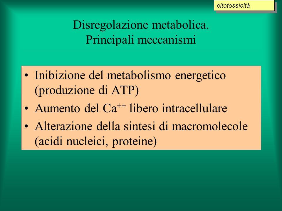 Disregolazione metabolica. Principali meccanismi