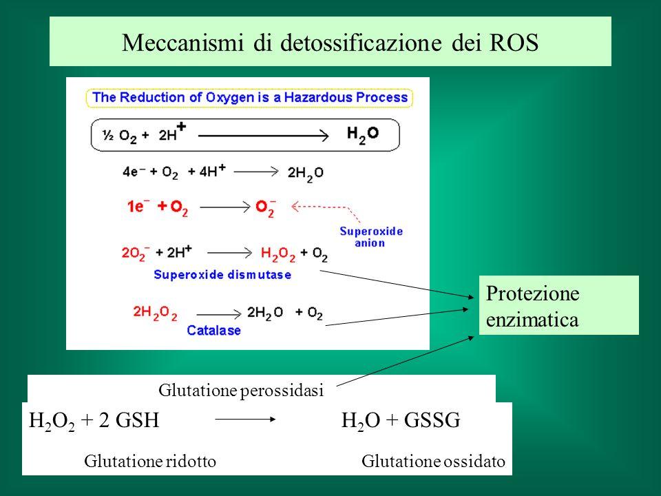 Meccanismi di detossificazione dei ROS