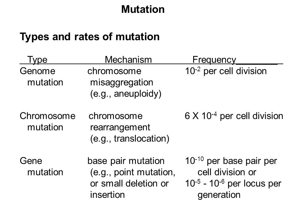 Types and rates of mutation
