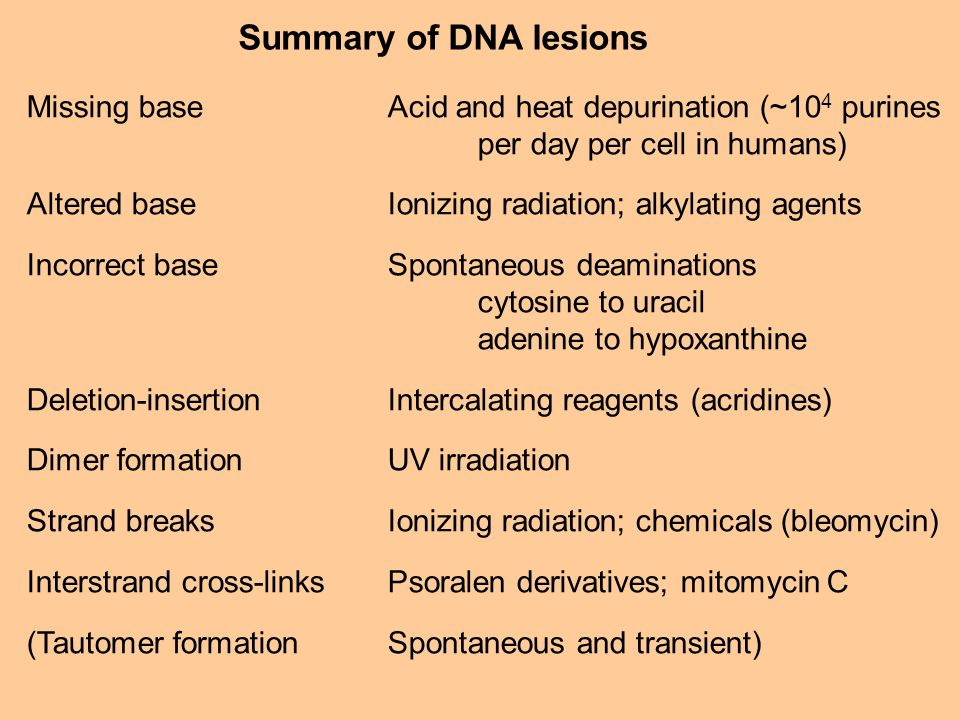 Summary of DNA lesions Missing base Acid and heat depurination (~104 purines. per day per cell in humans)