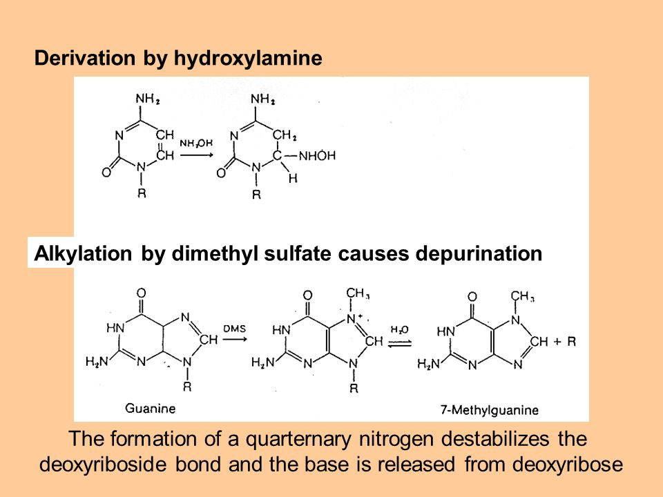 Derivation by hydroxylamine