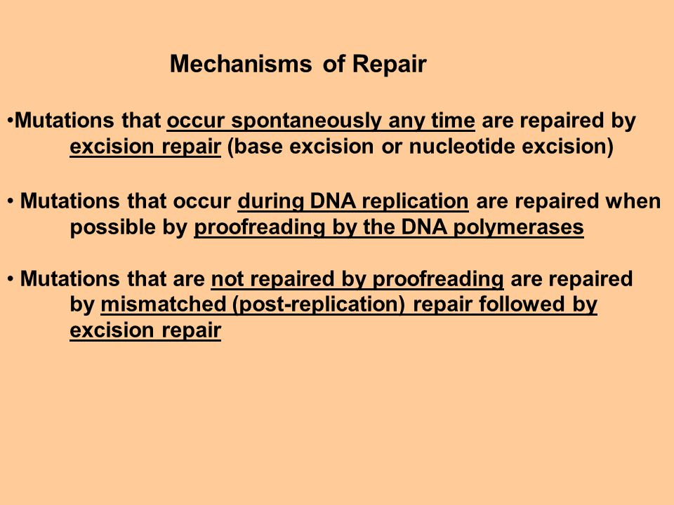 Mechanisms of Repair Mutations that occur spontaneously any time are repaired by. excision repair (base excision or nucleotide excision)