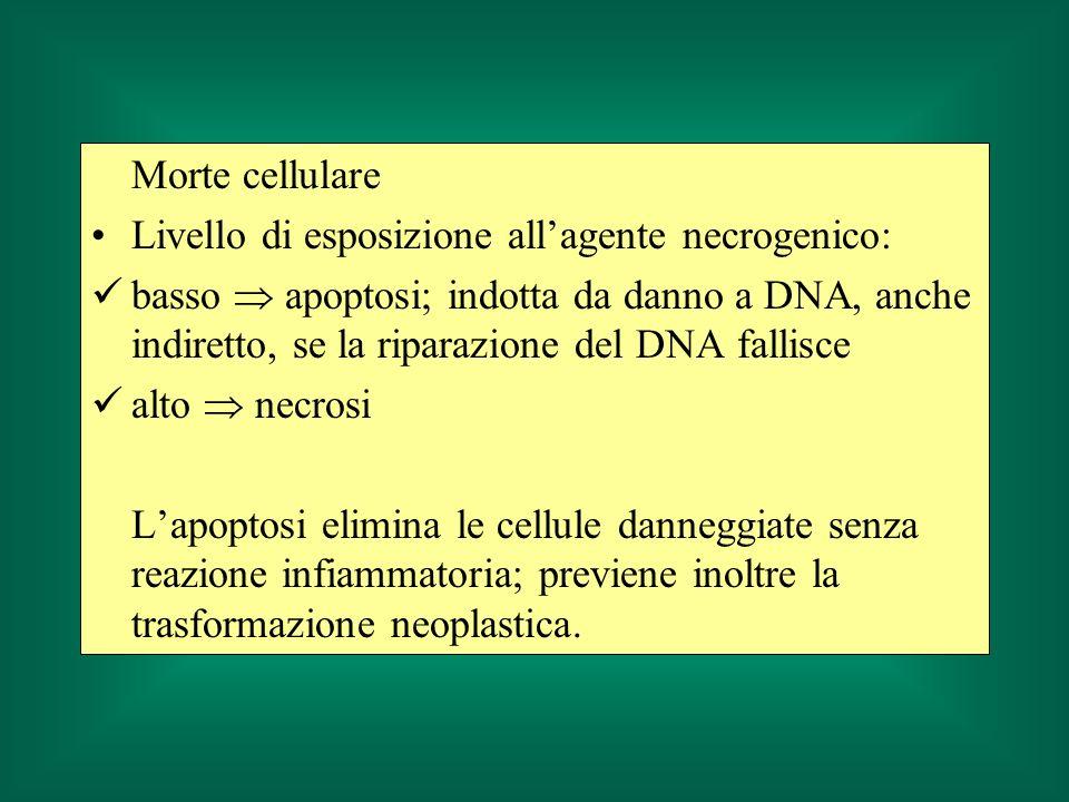 Morte cellulare Livello di esposizione all'agente necrogenico: