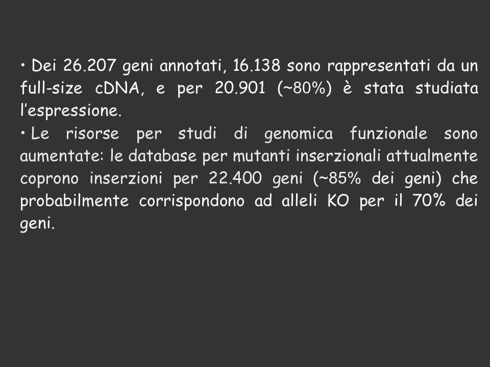 Dei 26.207 geni annotati, 16.138 sono rappresentati da un full-size cDNA, e per 20.901 (~80%) è stata studiata l'espressione.