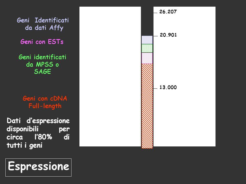 13.000 26.207. 20.901. Geni Identificati. da dati Affy. Geni identificati. da MPSS o SAGE. Geni con ESTs.