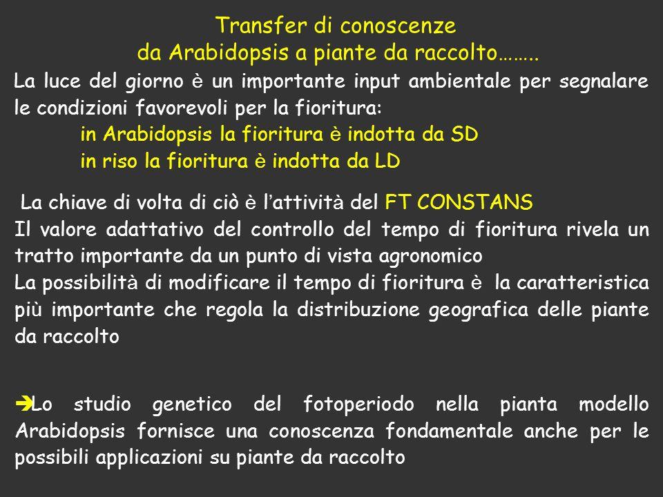 Transfer di conoscenze da Arabidopsis a piante da raccolto……..