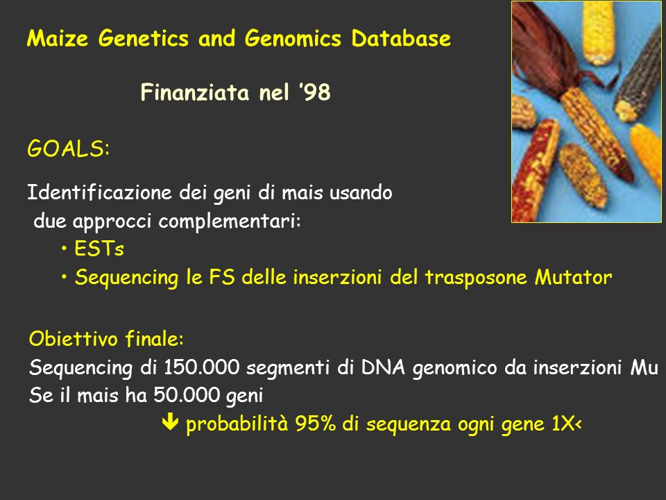 Maize Genetics and Genomics Database