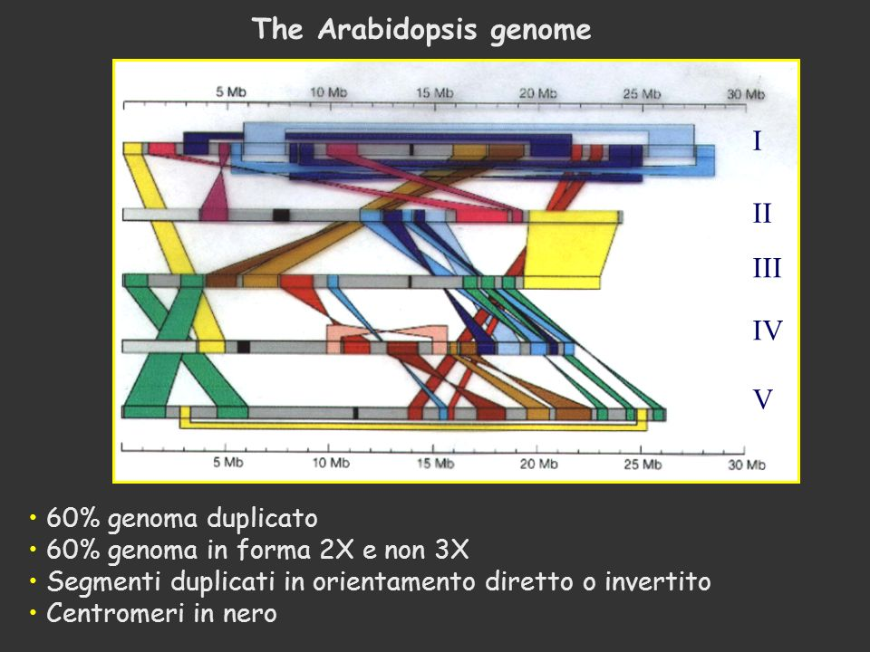 The Arabidopsis genome