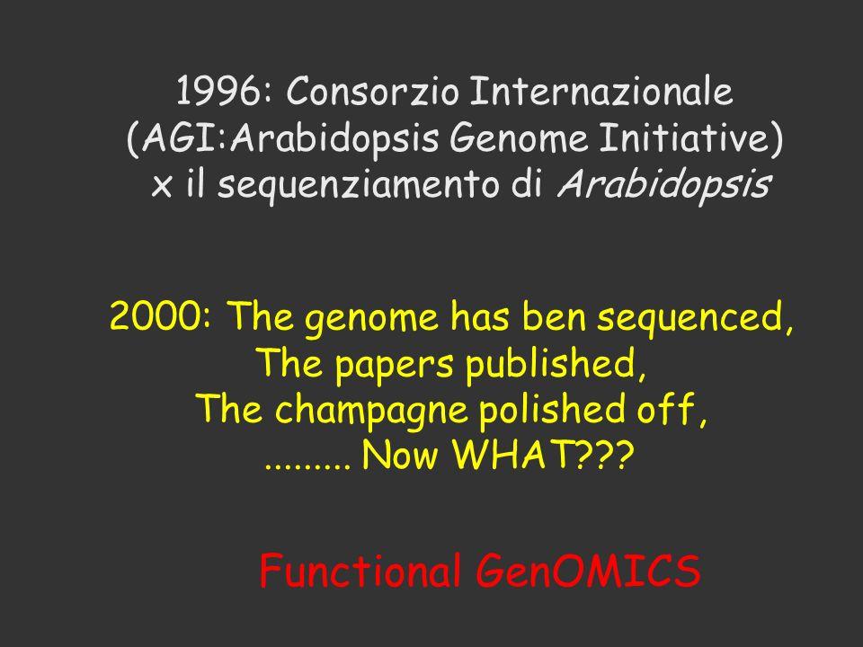 Functional GenOMICS 1996: Consorzio Internazionale