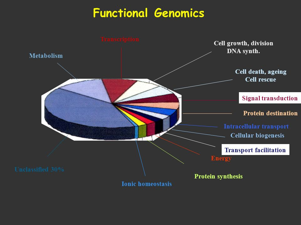 Functional Genomics Transcription Cell growth, division DNA synth.