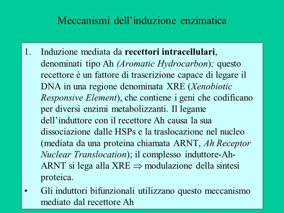 Meccanismi dell'induzione enzimatica
