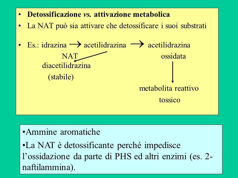 Detossificazione vs. attivazione metabolica