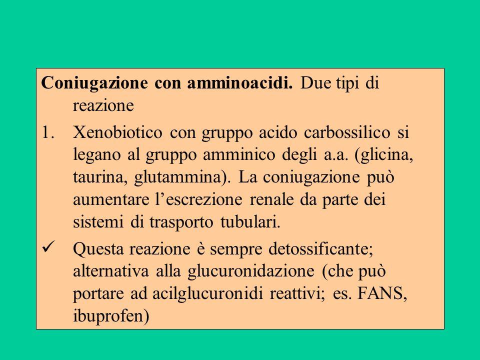Coniugazione con amminoacidi. Due tipi di reazione