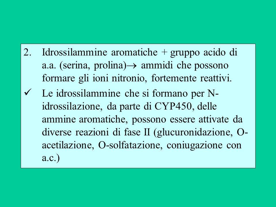 Idrossilammine aromatiche + gruppo acido di a. a