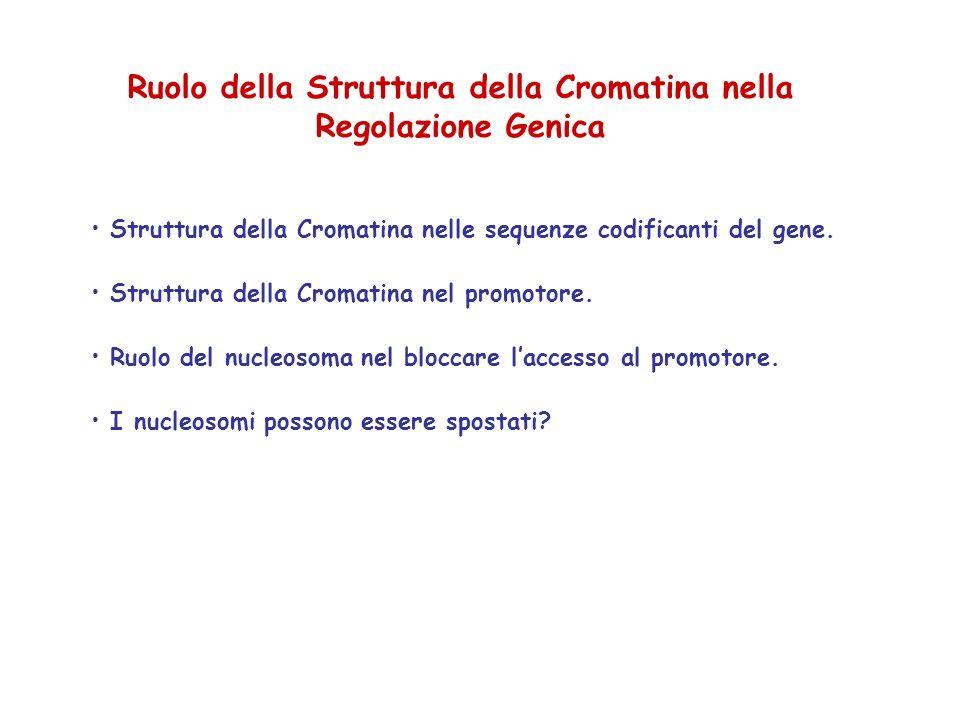 Ruolo della Struttura della Cromatina nella Regolazione Genica