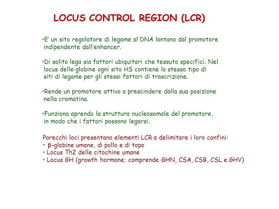 LOCUS CONTROL REGION (LCR)