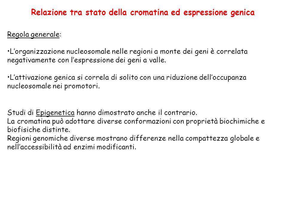 Relazione tra stato della cromatina ed espressione genica