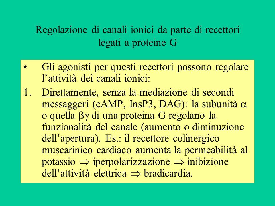 Regolazione di canali ionici da parte di recettori legati a proteine G