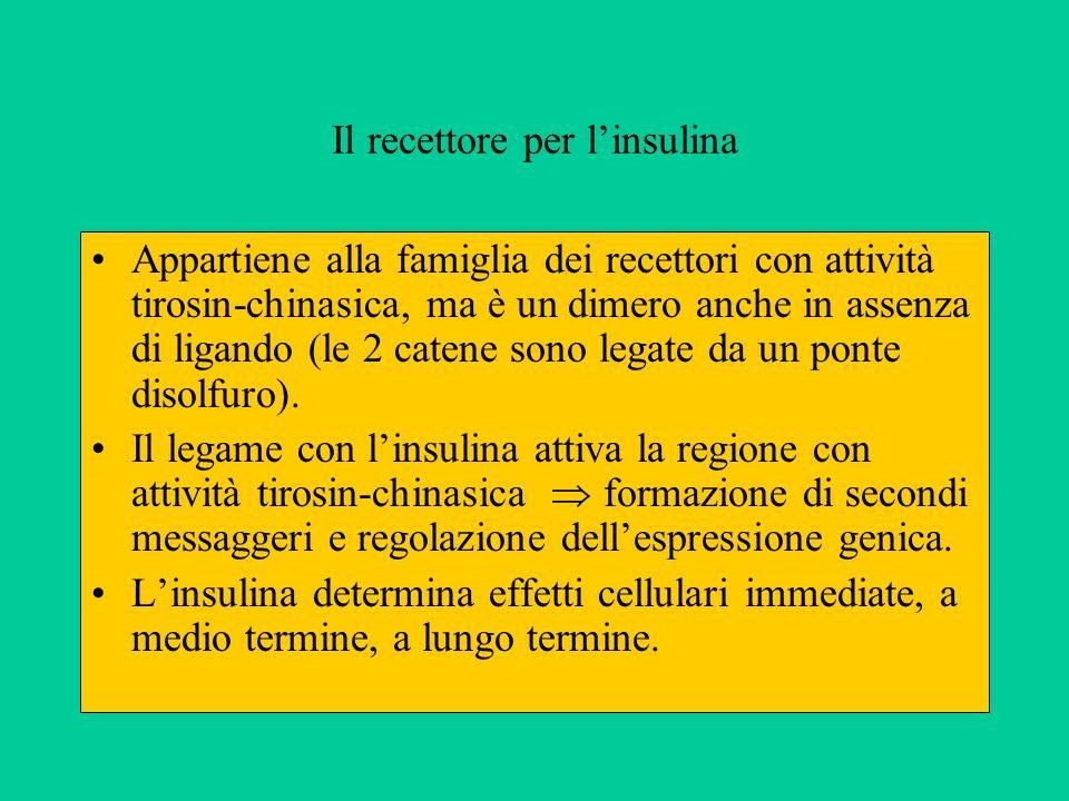 Il recettore per l'insulina