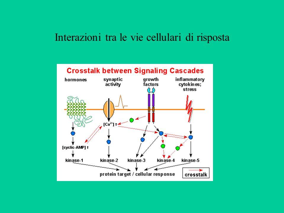 Interazioni tra le vie cellulari di risposta