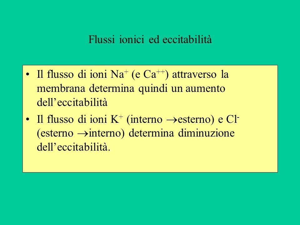 Flussi ionici ed eccitabilità
